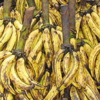 Banane plantain alloco du lendemain