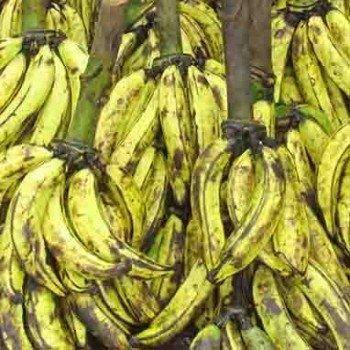 Banane plantain foutou du lendemain