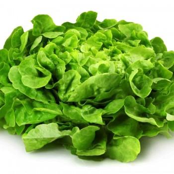 Salade/Laitue ( botte moyenne)