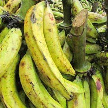 Banane plantain foutou du même jour